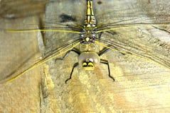 五颜六色的蜻蜓 免版税库存图片
