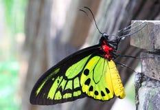 五颜六色的蝴蝶 库存照片