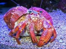 五颜六色的螃蟹 免版税库存照片