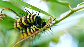 五颜六色的蠕虫吃绿色叶子的小组 股票录像