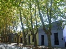 五颜六色的街道标示用白杨树 免版税库存照片