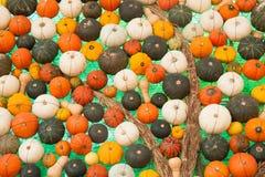 五颜六色的被分类的南瓜 库存图片