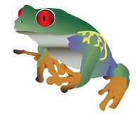 五颜六色的被注视的青蛙红色 库存图片