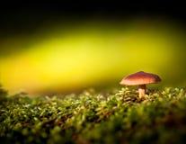 五颜六色的观点的蘑菇和青苔 免版税库存图片