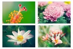 五颜六色的设计要素花集 库存图片