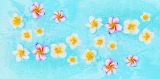 五颜六色的赤素馨花在土耳其玉色水,顶视图中开花 库存图片