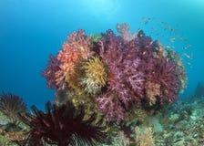 五颜六色的软的珊瑚礁 免版税库存图片