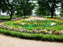 五颜六色的郁金香和花在公园圣徒Peterburg增长 免版税库存照片