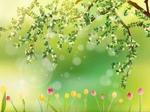 五颜六色的郁金香在公园。EPS 10 免版税库存图片
