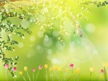 五颜六色的郁金香在公园。EPS 10 库存照片