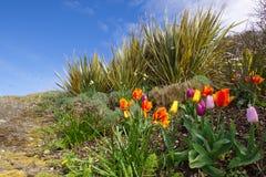 五颜六色的郁金香在山坡开花在海镇 免版税库存图片
