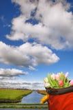 五颜六色的郁金香篮子在Zaanse Schans,阿姆斯特丹地区,荷兰附近的 免版税库存照片