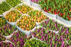 五颜六色的郁金香的分类在花店的 库存图片