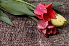 五颜六色的郁金香花束 图库摄影