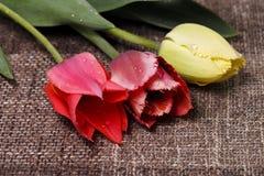五颜六色的郁金香花束 库存照片