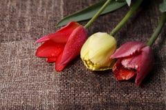 五颜六色的郁金香花束 免版税库存照片