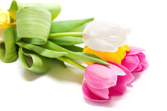 五颜六色的郁金香 免版税图库摄影