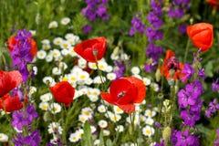 五颜六色的野花关闭  免版税库存图片