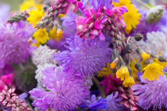 五颜六色的野花束特写镜头,背景 库存图片