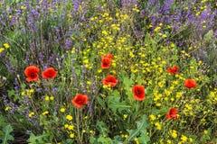 五颜六色的野花背景  免版税库存图片