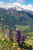 五颜六色的野花,开花在山草甸 免版税库存照片