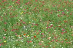 五颜六色的野花 库存照片