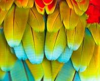 五颜六色的金刚鹦鹉羽毛 免版税库存照片