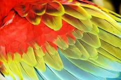 五颜六色的金刚鹦鹉翼 免版税库存照片