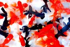 五颜六色的金鱼 库存图片