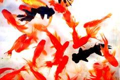 五颜六色的金鱼 免版税库存照片