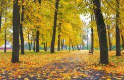 五颜六色的金黄叶子在秋天公园 免版税图库摄影
