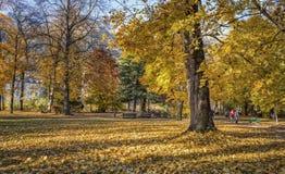五颜六色的金黄色的树 库存照片