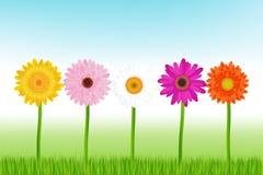 五颜六色的雏菊向量 库存照片