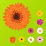 五颜六色的雏菊向量 库存图片
