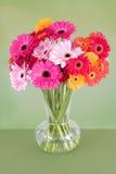 五颜六色的雏菊花瓶 库存照片