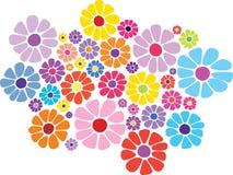 五颜六色的雏菊花 库存图片