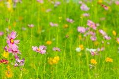 五颜六色的雏菊花 库存照片