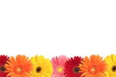 五颜六色的雏菊边界 免版税库存图片