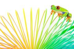 五颜六色的青蛙 免版税库存图片
