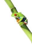 五颜六色的青蛙 库存图片