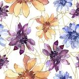 五颜六色的非洲雏菊 花卉植物的花 无缝的背景模式 免版税库存照片