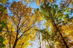 五颜六色的顶层结构树 库存照片