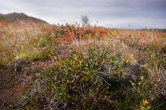 五颜六色的领域在冰岛 库存图片