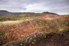 五颜六色的领域在冰岛 库存照片