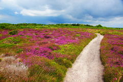 五颜六色的领域风景 免版税库存照片