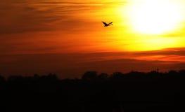 五颜六色的飞行日落天鹅 免版税库存图片