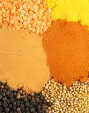 五颜六色的香料 免版税库存照片