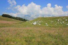 五颜六色的高山草甸,朱利安阿尔卑斯山,斯洛文尼亚 免版税库存图片