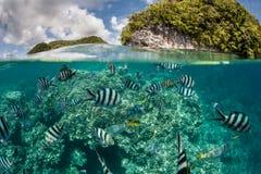 五颜六色的鱼在热带盐水湖 免版税库存照片
