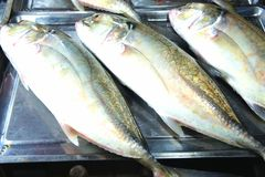 五颜六色的鱼待售 库存图片